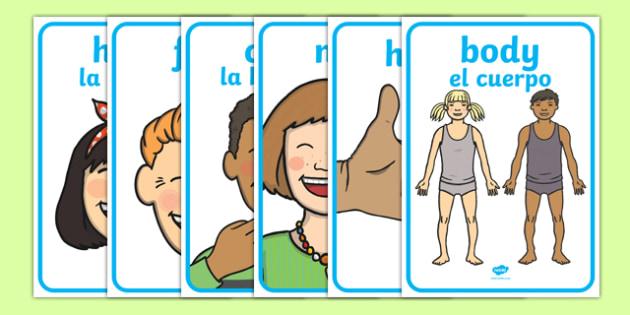 My Body Display Posters English/Spanish