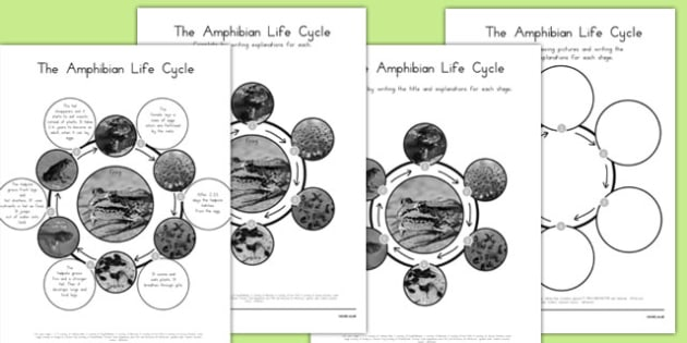 Amphibian Life Cycles - amphibians, animals, life, processes, australia, australian, science, growing, changing