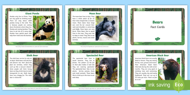 Bear Fact Cards - bear, fact cards, fact, cards, information