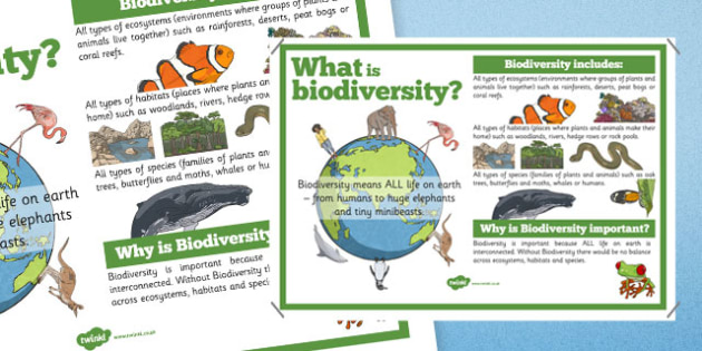 Biodiversity Information Display Poster - Biodiversity, Green schools environment, display, poster, information, green, flag, nature