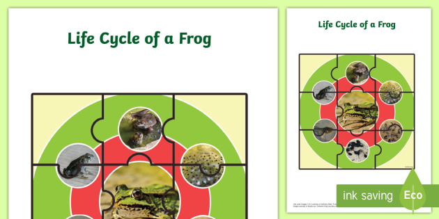 Life Cycle of a Frog Jigsaw - life cycles, cutouts, games, game