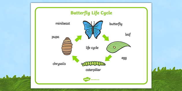 Butterfly life cycle worksheet ks2