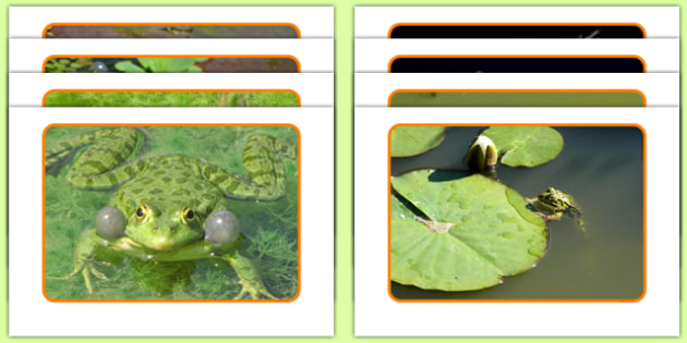 Frogs Display Photos - Jump, jumping, dance, eyfs, jungle, movement