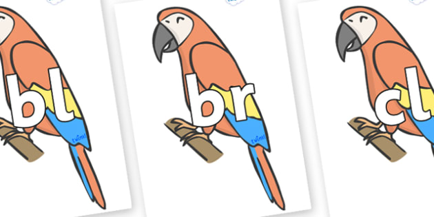 Initial Letter Blends on Parrots - Initial Letters, initial letter, letter blend, letter blends, consonant, consonants, digraph, trigraph, literacy, alphabet, letters, foundation stage literacy