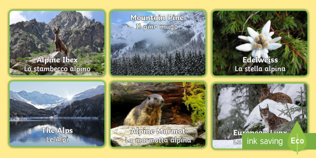 Italian English Animsld: Alpine Animals And Plants Display Photos English/Italian