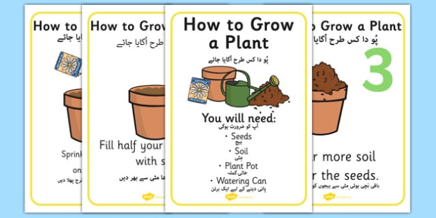 How to Grow a Plant Posters Urdu Translation - urdu, Plant, Growth, Topic, Foundation stage, Flower, knowledge and understanding of the world, investigation, living things, labelling, labelling plant