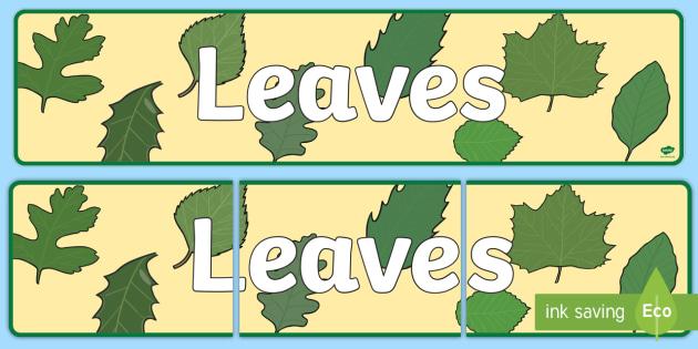 Leaves Display Banner - Banners, Displays, Visual, Visuals, Leaf