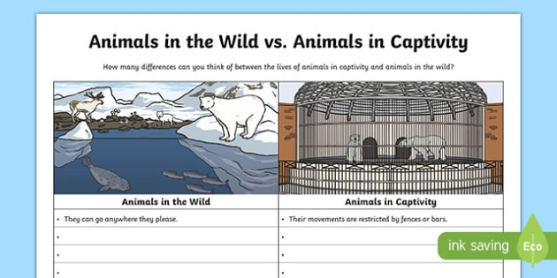 Animals in the Wild vs Animals in Captivity Activity Sheet, worksheet
