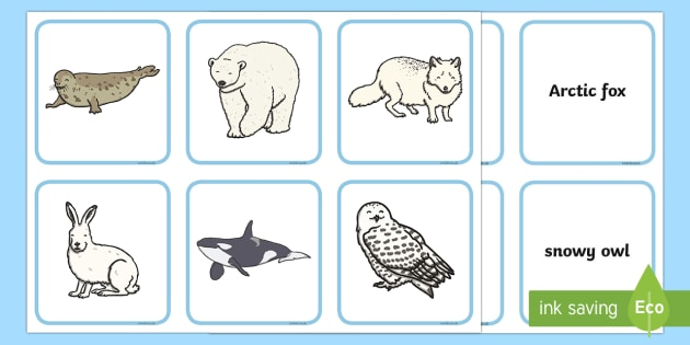 Arctic Animals and their Young Word Matching Cards - The Arctic, Polar Regions, north pole, south pole, explorers, animals and their young, Arctic animal