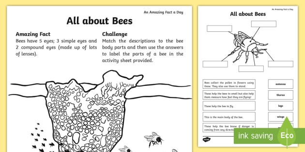 All about Bees Worksheet / Worksheet - Amazing Fact Of The ...