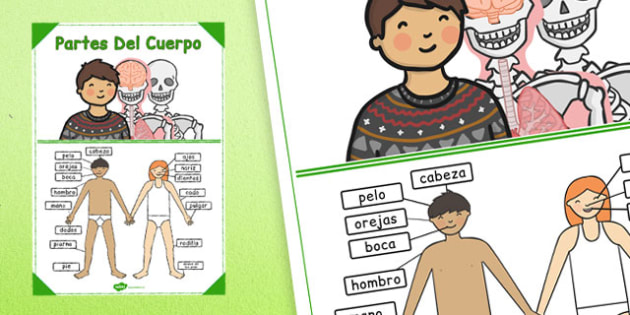 Spanish Parts of the Body Poster - spanish, body, parts, poster