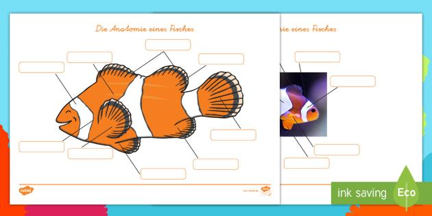 NEW * Die Anatomie eines Fisches Arbeitsblätter - Fische