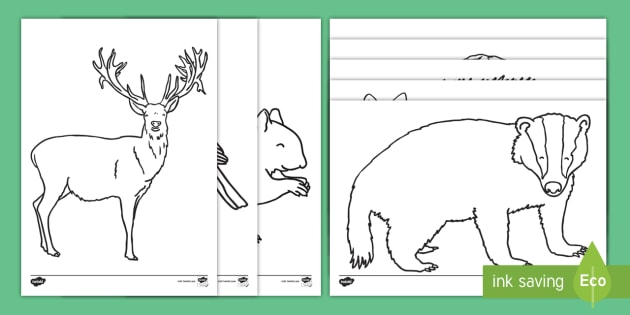 Forest And Woodland Colouring Pages Eyfs Early Years Key Stage 1 Rhtwinklcouk: Coloring Pages Woodland Animals At Baymontmadison.com