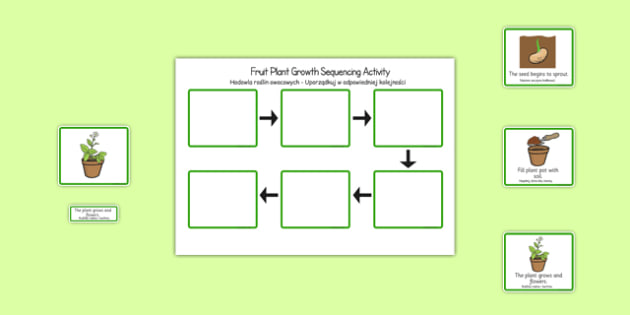 Plant Growth Sequencing Activity Polish Translation - EAL, translated, bilingual, grow, science, nature