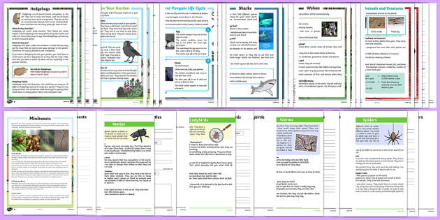 Animals and Creatures Differentiated Reading Comprehension Activity Pack-Australia