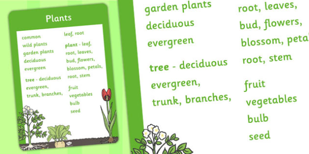 Year 1 Plants Scientific Vocabulary Poster - vocabulary, poster