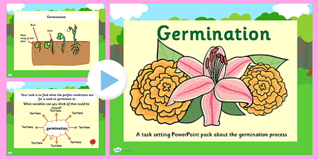 Germination Task Setter PowerPoint - germination, germination powerpoint, life cycle, plant life cycles, living things, flowers, flower life cyclem, flower
