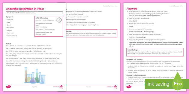Respiration Worksheet - KS3 Secondary Resources