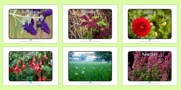 Garden Plants Display Photos - garden, plants, display photos