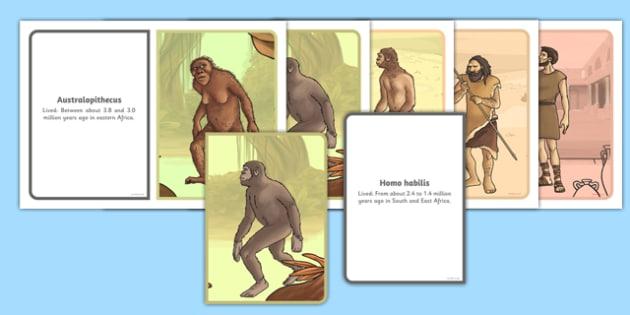 Human Evolution Ordering Cards - cards, evolution, human, order