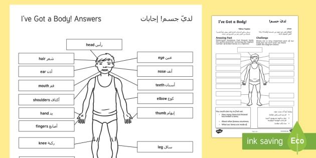 i 39 ve got a body worksheet activity sheet arabic translation. Black Bedroom Furniture Sets. Home Design Ideas