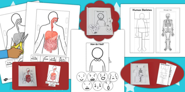 Science Humans Interactive Visual Aids Resource Pack - visuals