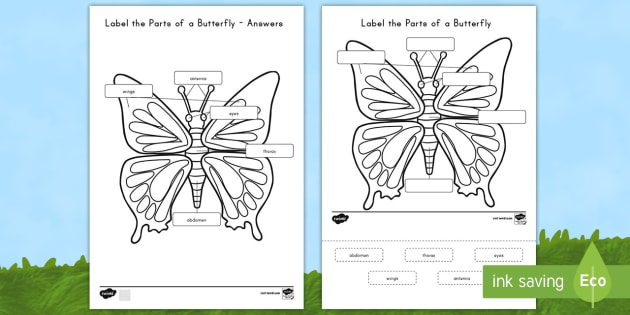 Label the parts of the butterfly worksheet activity sheet label the parts of the butterfly worksheet activity sheet usa early childhood science ccuart Images
