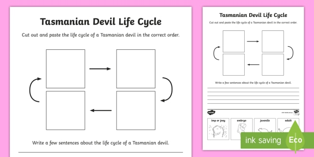 tasmanian devil life cycle sentence writing worksheet