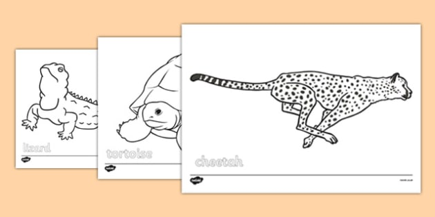 Desert Animals Colouring Sheets