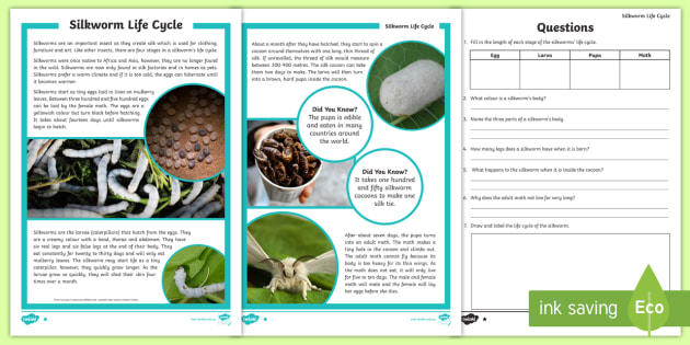 3-6 Life Cycle of a Silkworm Differentiated Reading ...
