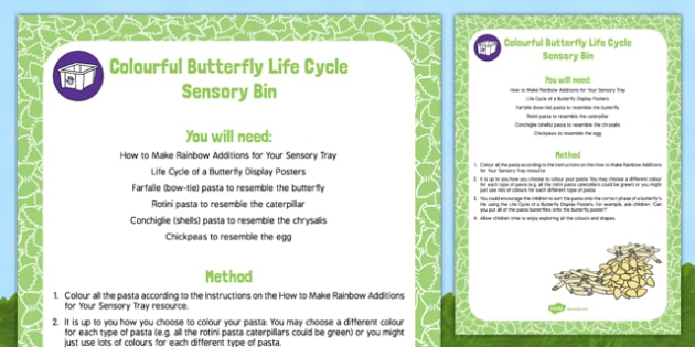 Colourful Butterfly Life Cycle Sensory Bin - Butterfly Life Cycle egg caterpillar chrysalis EYFS
