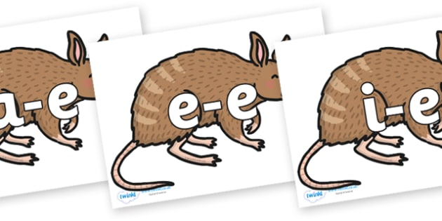 Modifying E Letters on Bandicoot - Modifying E, letters, modify, Phase 5, Phase five, alternative spellings for phonemes, DfES letters and Sounds