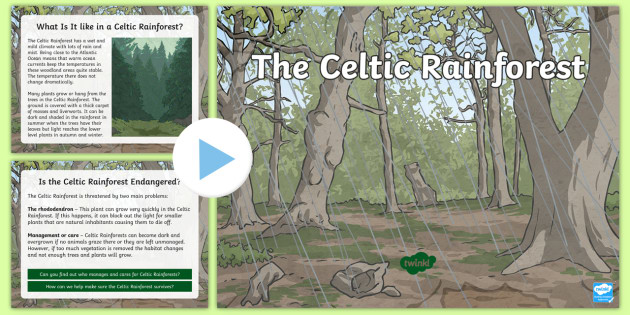 new the celtic rainforest powerpoint woodland trees
