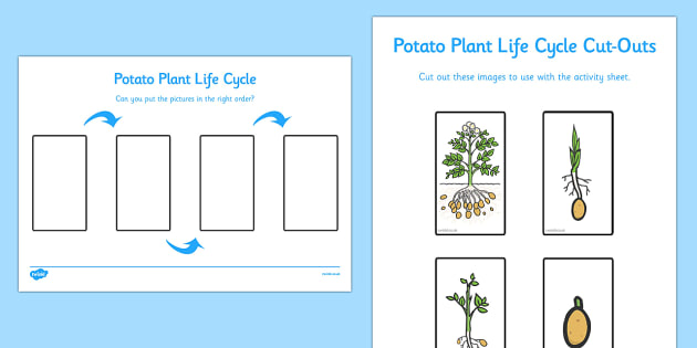 Potato Life Cycle Worksheet Activity Sheet Life Cycles
