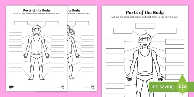 Body Parts Cut and Stick Worksheet - cut and stick, asn, sen