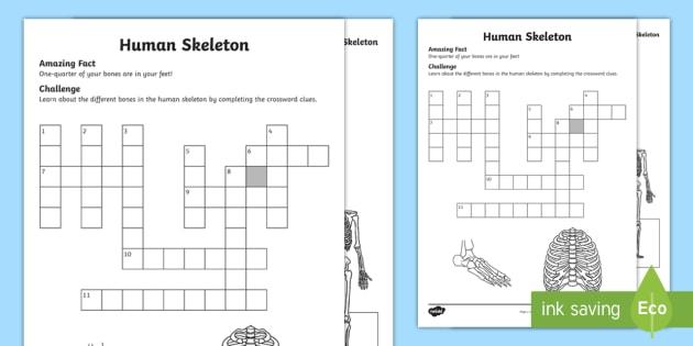 Human Skeleton Crossword Teacher Made