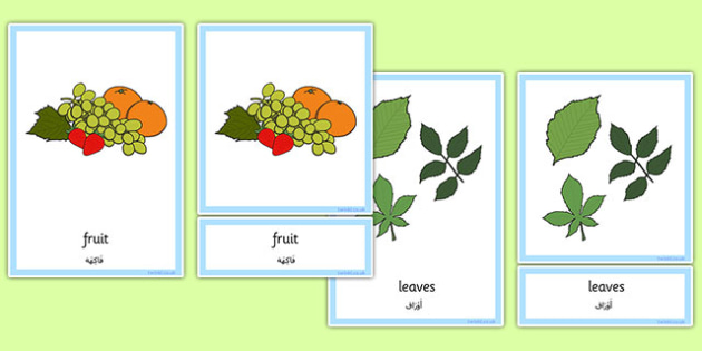 Plants and Growth Three Part Cards Arabic Translation - arabic, plants and growth, cards, plants, growth
