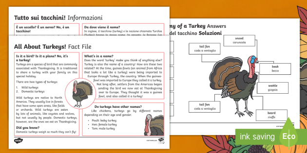 Italian English Animsld: All About Turkeys Fact File Activity Pack English/Italian