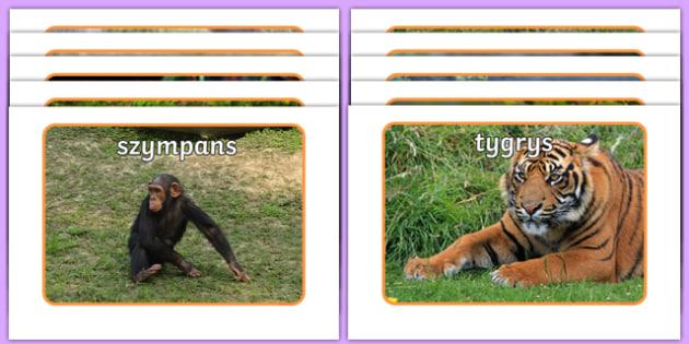 Zdjęcia na gazetkę Zwierzęta z dżungli po polsku