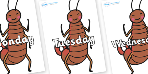 Days of the Week on Earwigs - Days of the Week, Weeks poster, week, display, poster, frieze, Days, Day, Monday, Tuesday, Wednesday, Thursday, Friday, Saturday, Sunday
