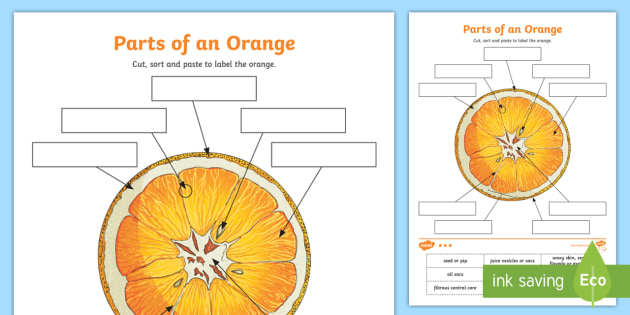 Parts Of An Orange Worksheet Activity Sheet Orange Fruit