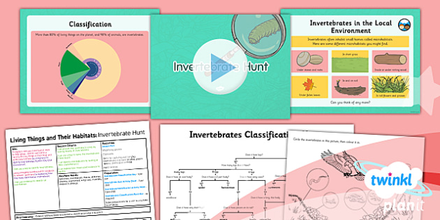 Science: Living Things and Their Habitats: Invertebrate Hunt Year 4 Lesson Pack 3