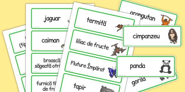 Pădurea tropicală - Cartonașe cu imagini și cuvinte - pădurea tropicală, pădure, cartonașe, imagini, cuvinte, vocabular, lexic, romanian, materiale, materiale didactice, română, romana, material, material didactic