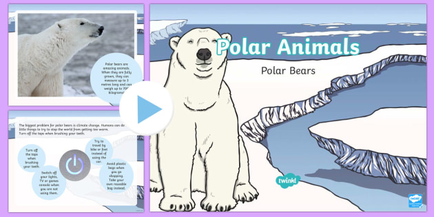 Kidfs Map Of Where Polar Bears Live on