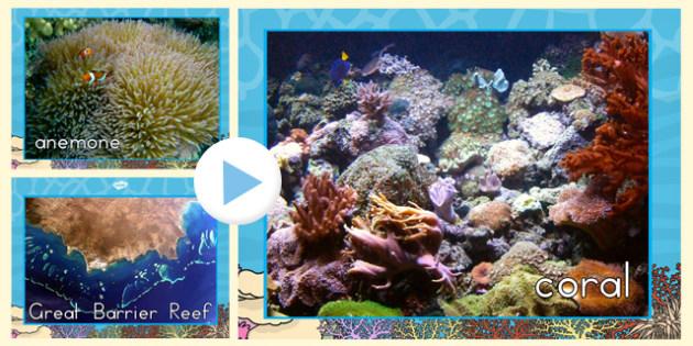 Great Barrier Reef Photo Powerpoint - australia, photo, barrier