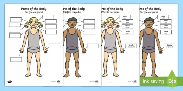 Parts of the Body Senses Labelling Activity Sheet English/Romanian - Parts of the Body Senses Labelling Activity Sheet - worksheet, body, ourselves , sences, sesnses, ou