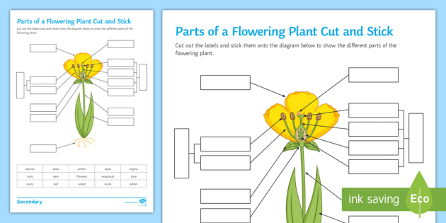 Parts Of A Flowering Plant Cut And Stick Worksheet Activity
