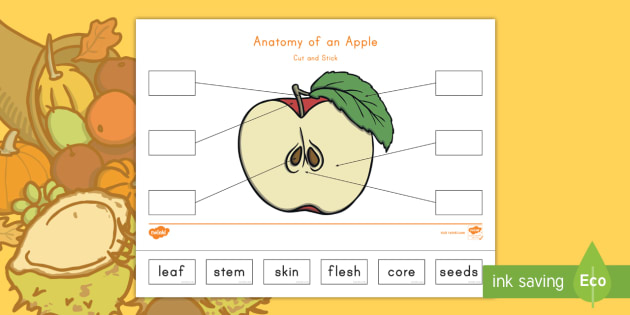 Anatomy Of An Apple Cut And Paste Activity