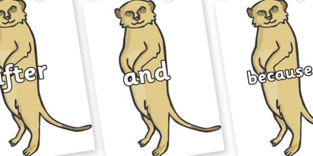 Connectives on Meerkats - Connectives, VCOP, connective resources, connectives display words, connective displays