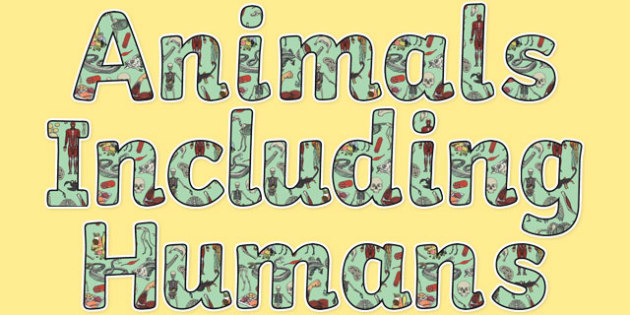 Animals Including Humans Display Lettering - animals including humans, display lettering, display, letter, Science lettering, Science display, Science display lettering